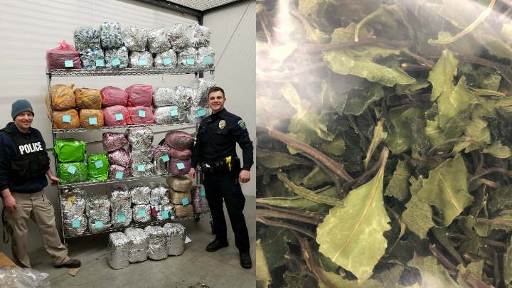 Police seize about 500 pounds of illegal drug khat from Twin